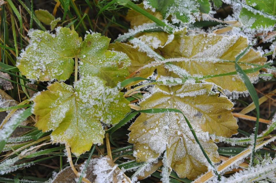Заморозки ожидаются в Нижегородской области с 6 по 12 сентября.