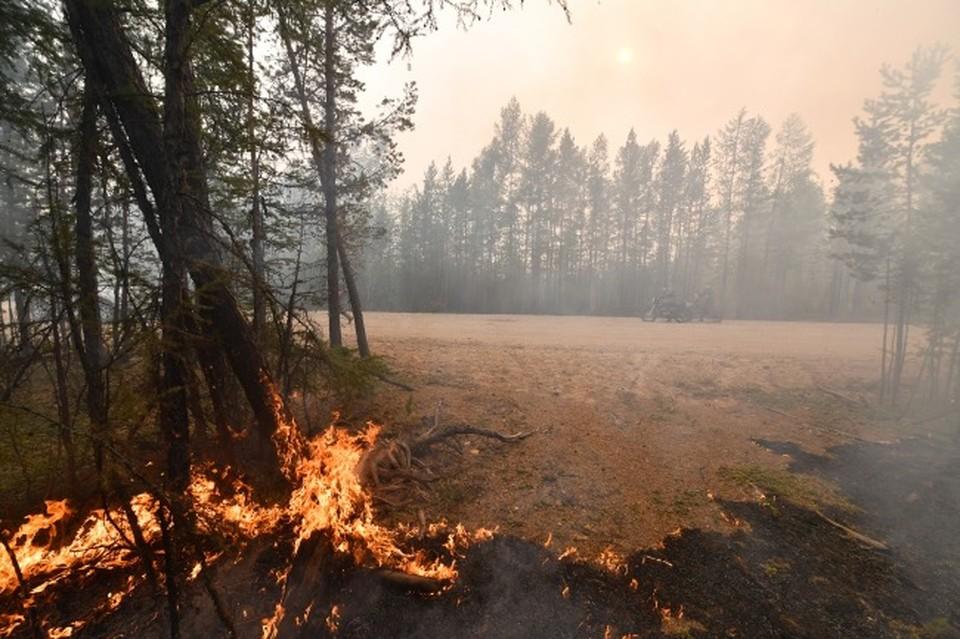 Шесть лесных пожаров общей площадью более 12 гектаров зафиксировали в Смоленской области.