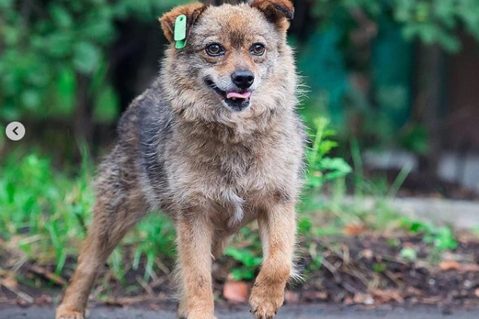 В Ростове ищут хоозяев для 16 оставшихся без хозяйки животных. Фото: Центр безнадзорных животных